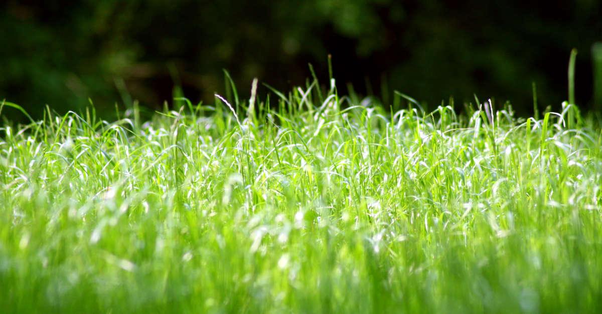 Der passende Rasenmäher – AGRAVIS