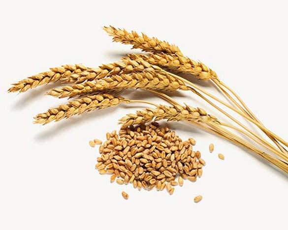 Lemirex Produkte Getreideähren Getreide