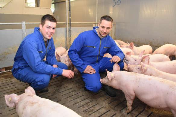 Schweinefütterung beim Schweinmastbetrieb Hagemann in Haltern