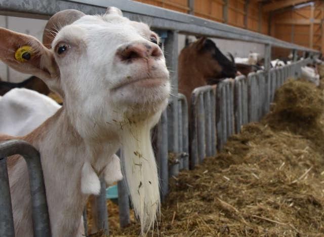 Landwirt Markus Mütze betreibt einen Bio-Ziegen-Betrieb. Martin Epping und Lorenz Sökefeld von der Biomühle Hamaland (v.re.) begutachten das Futter.