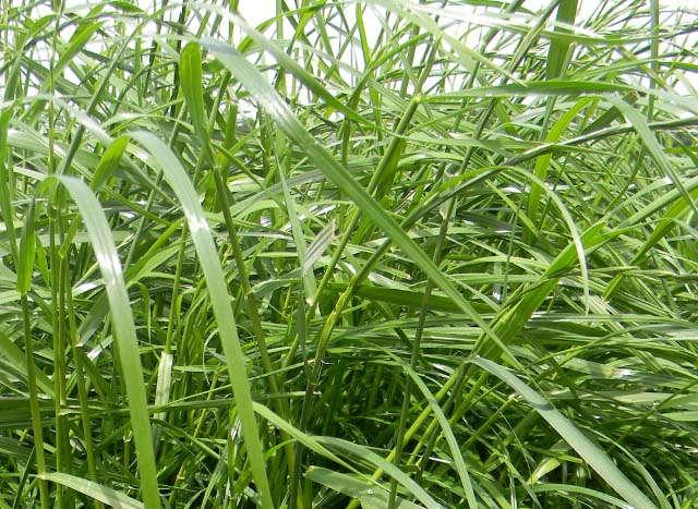 Relaunch, Teaser, Pflanzenbau, Grünlandanbau, Grass