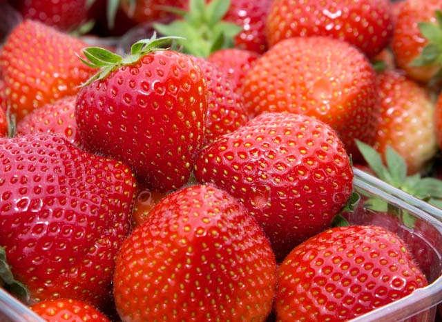 Relaunch, Teaser, Pflanzenbau, Sonderkulturen, Erdbeeren, Erdbeerschale