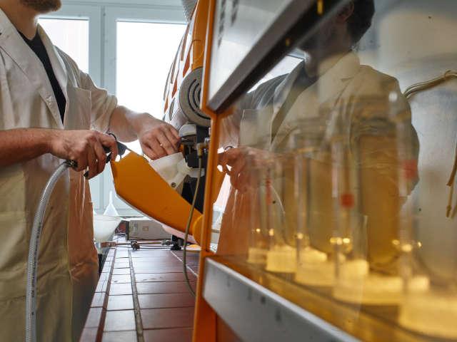 Im Labor der AGRAVIS werden neue Saatsorten untersucht und die Keimfähigkeit sowie die Triebkraft kontrolliert.