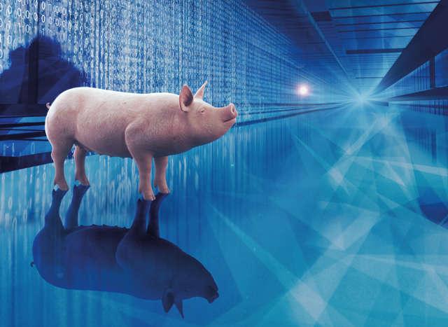 Relaunch, Teaser, Themen und Kampagnen, Zukunft Füttern, Schwein, Technologie