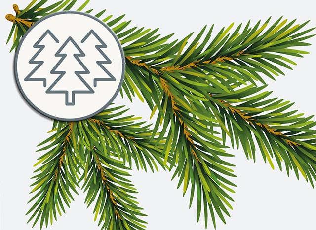 Infografik Weihnachtsbäume Teaser 640 x 467