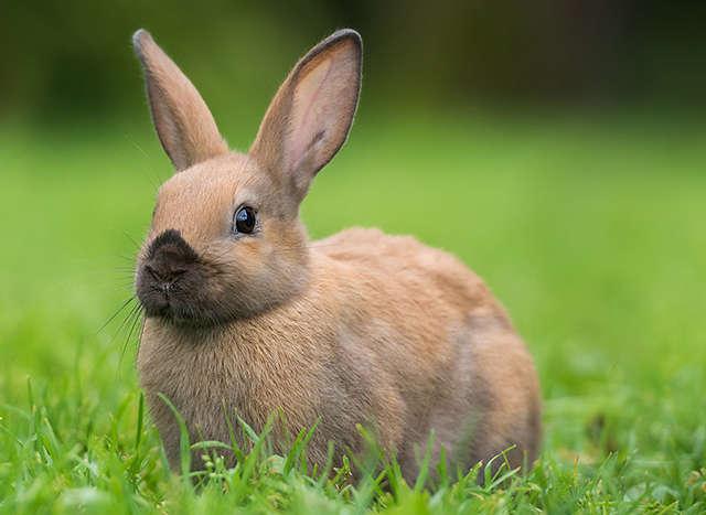 Kaninchen Teaser RL 640 x 467