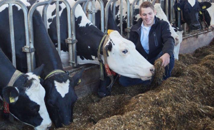 Milchviehbetrieb Wefer GbR: Timo Hußmann mit seinen Milchkühen