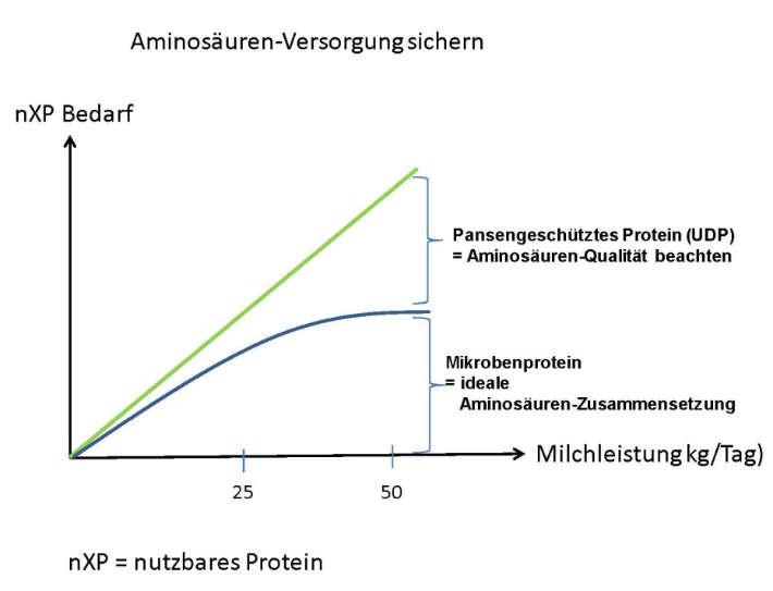 Aminosäuren in der Milchviehfütterung
