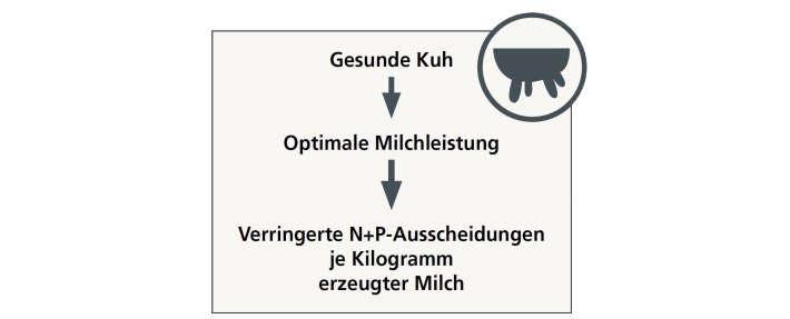 Langlebigkeit Phokus Milchleistung