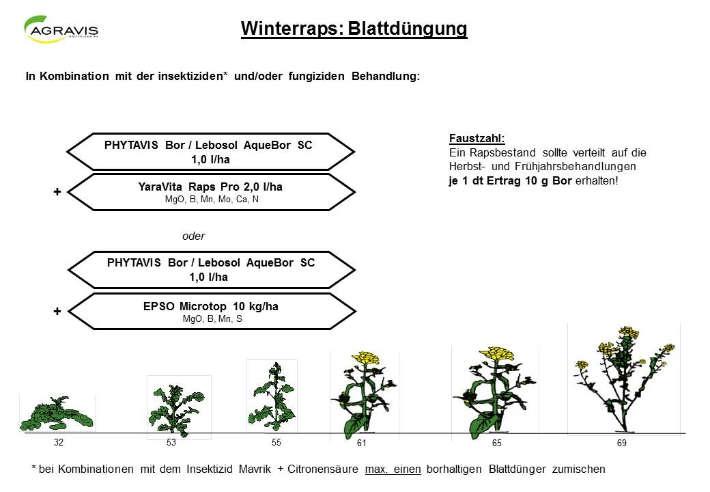Winterraps Blattdüngug