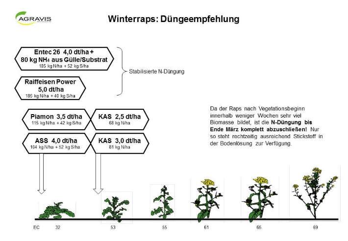 Winterraps: Düngeempfehlung